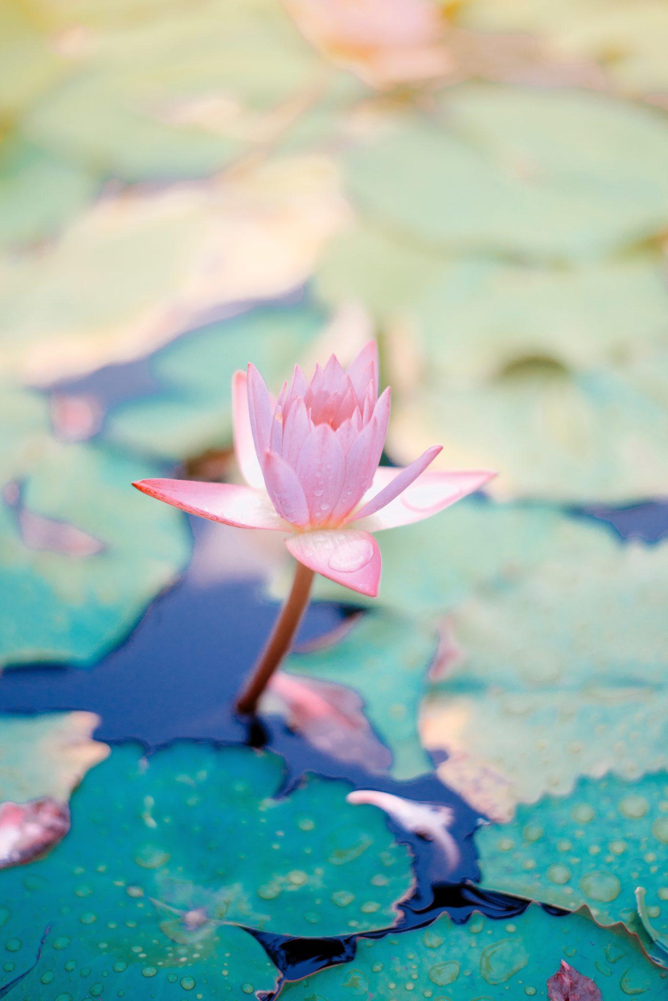 Quelles habitudes mettre en place pour être zen au quotidien